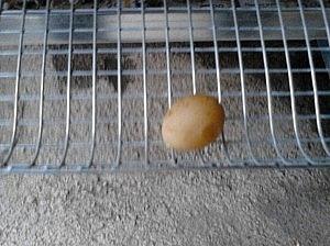 1. jaje!